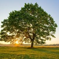 Tree - AdvancedVectors.com